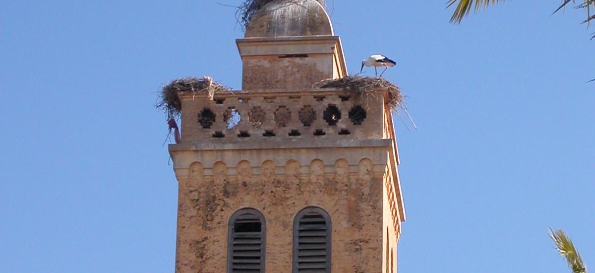 Cigogne & église d'Algérie