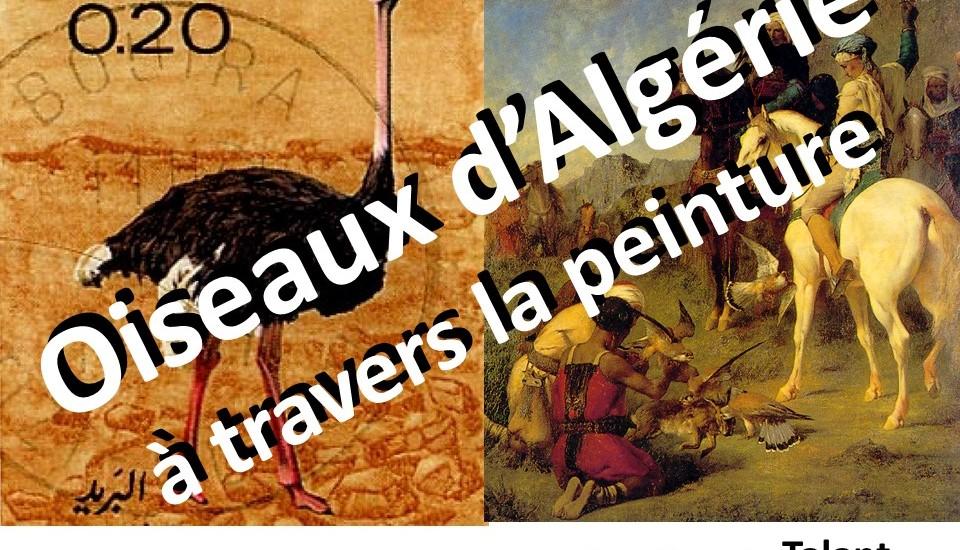 Oiseaux d'Algérie